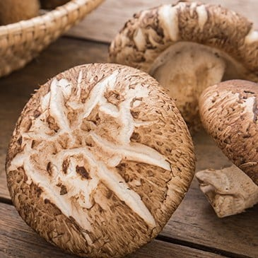 Shiitake Mushrooms – Nam dong co tuoi