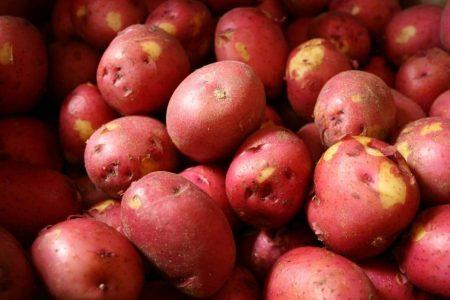 Khoai tây baby đỏ cải thiện hệ miễn dịch