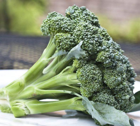 Bông cải xanh – Broccoli – Santorino.org