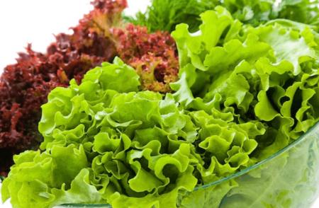 Thành phần dinh dưỡng của rau Lettuce Santorino Coffee & Veggies