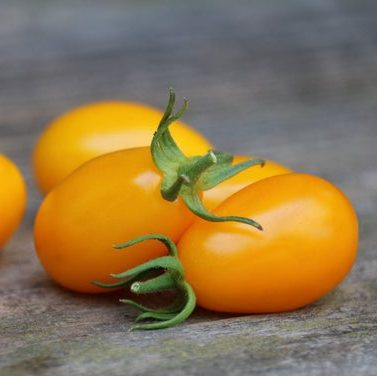 ca chua bi vang - yellow plum tomatos