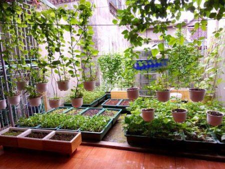 trồng rau trên sân thượng santorino coffee & veggies