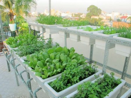 cách trồng rau sạch santorino coffee & veggies