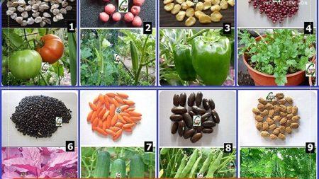 mua hạt giống rau ở đâu santorino coffee & veggies
