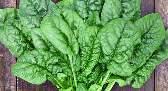 Công dụng của rau cải bó xôi đối với hoạt động sống của con người