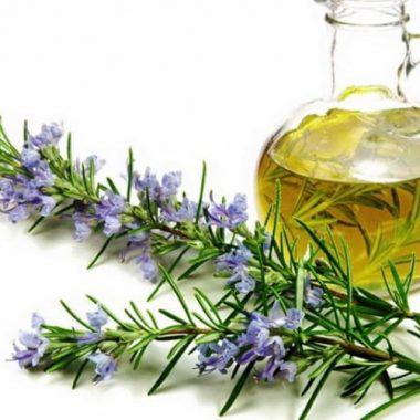 Công dụng của tinh dầu rosemary đối với đời sống con người
