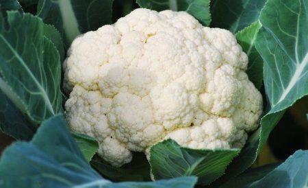 Những lợi ích cho sức khỏe từ bông cải trắng