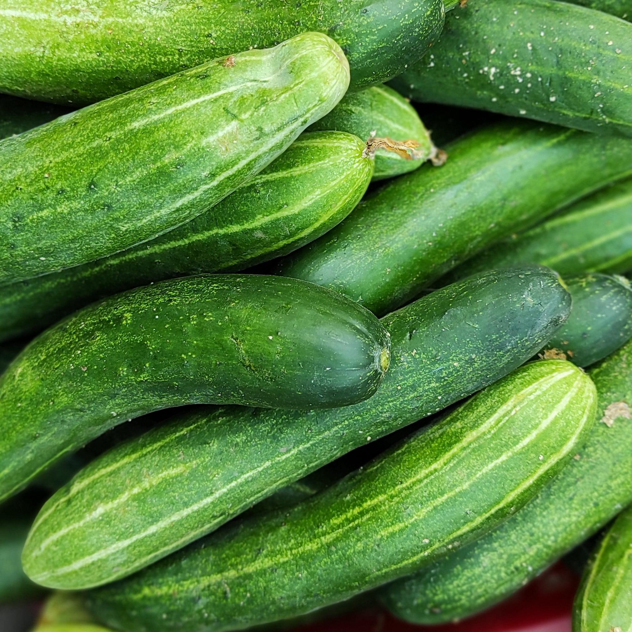 Dưa leo - Cucumber 500g