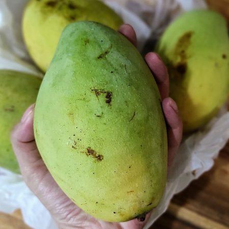 Xoai cat hoa loc - Mango Hoa Loc